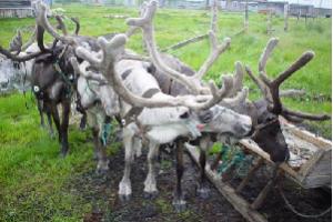 Tundra Nenets Grammar